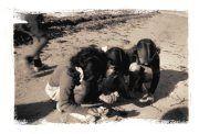 1942 Beachcombing